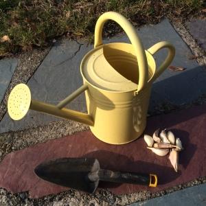 Planting Garlic (2)